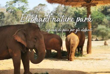 santuario-degli-elefanti-di-chiang-mai